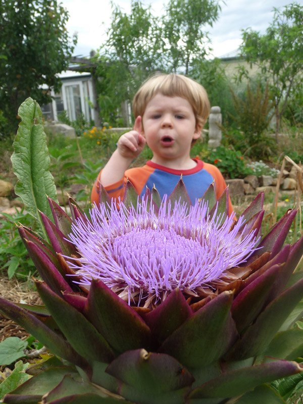 A great big purple artichoke flower.