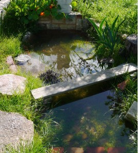 Pond overflow / soak next to fruit trees.